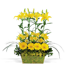 Yellow Garden Rows