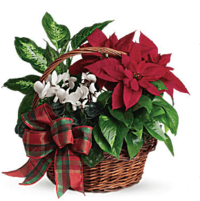 Holiday Planter