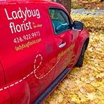 Ladybus_Small