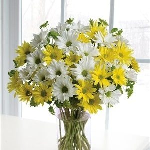 Cheerful daisies