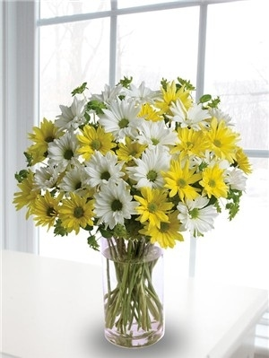 Cheerful daisies