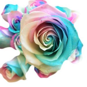 Rainbow Roses - 1 dozen