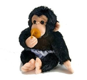 Charles the Baby Chimpanzee