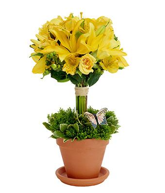 Sunny Topiary