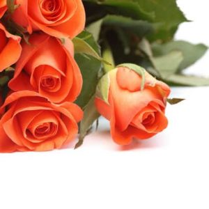 Fascination - orange roses