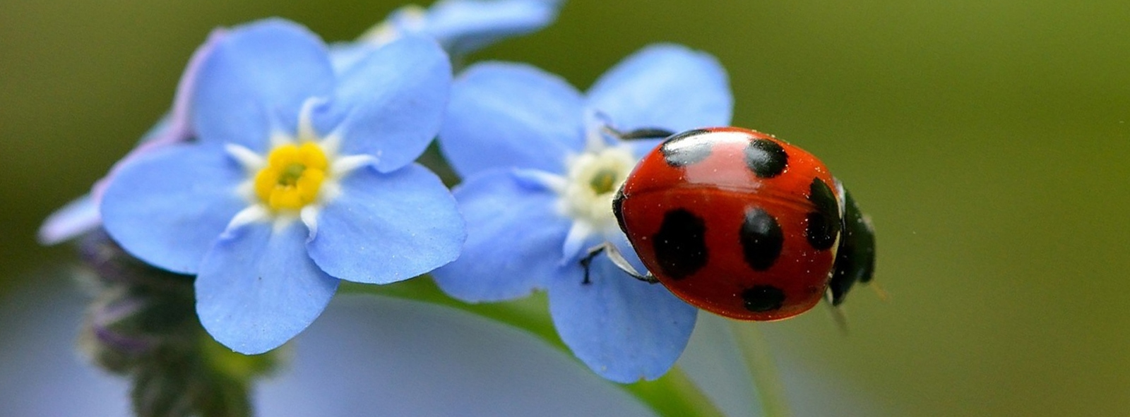 Ladybug Florist Your Florist In Toronto For Flowers And