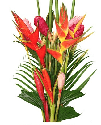 juicy tropical bouquet