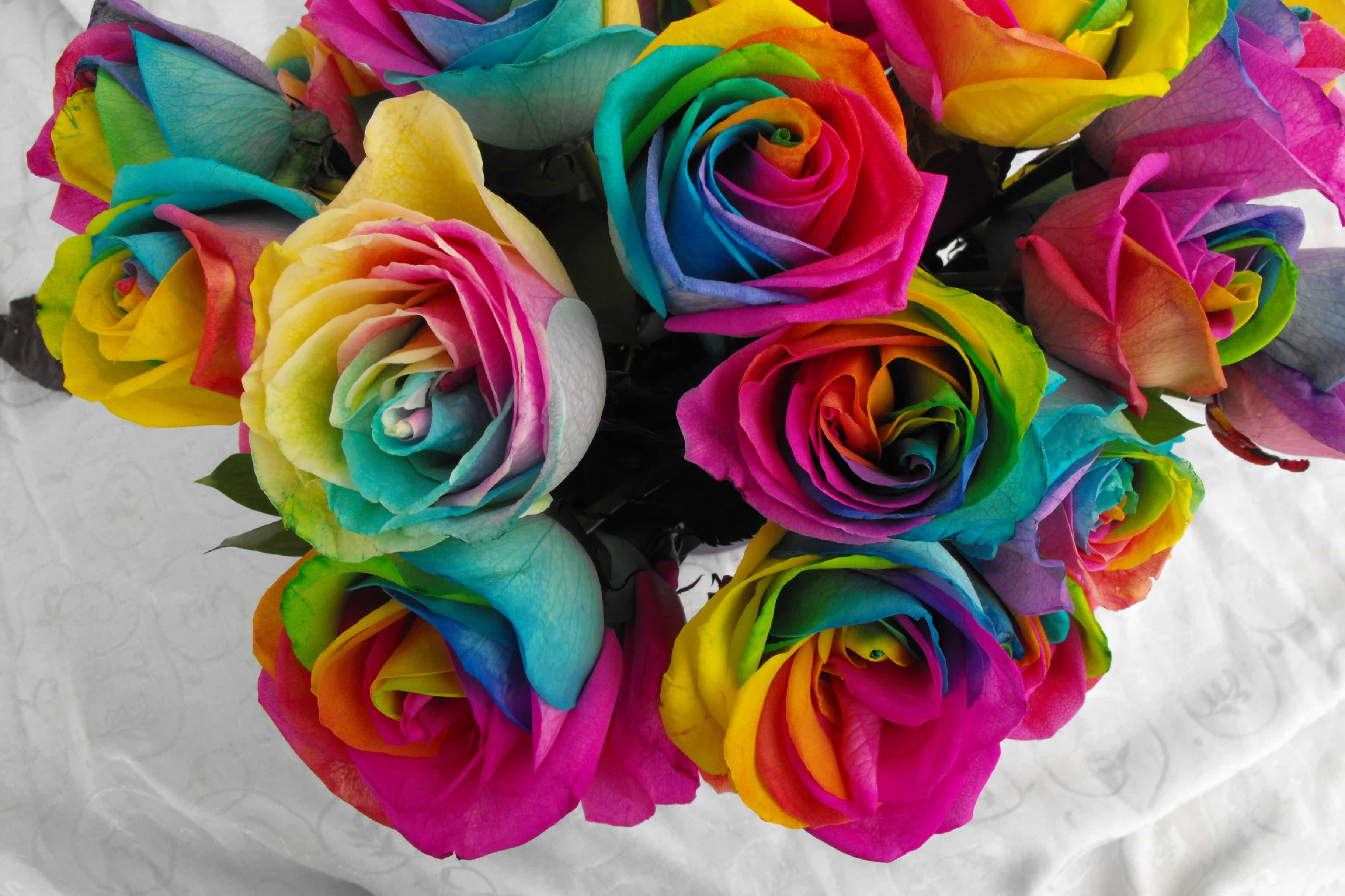 Rainbow roses buy the nursery rainbow rose seeds online at for Growing rainbow roses from seeds
