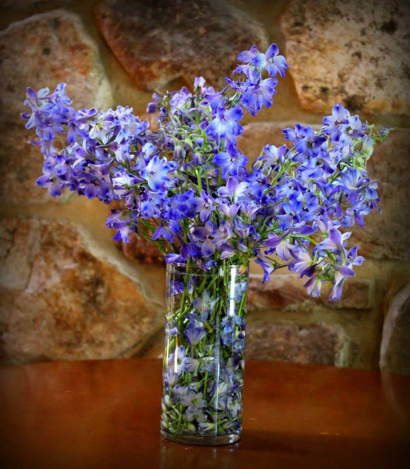 Summer Delphiniums