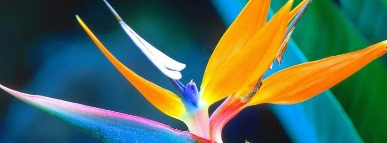 Ladybug Florist Birds of Paradise