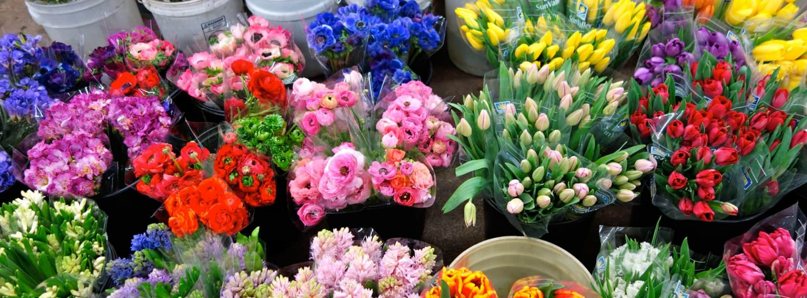 Ladybug Florist – Your Florist in Toronto for Flowers and Gifts for