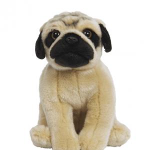 Affectionate Pug