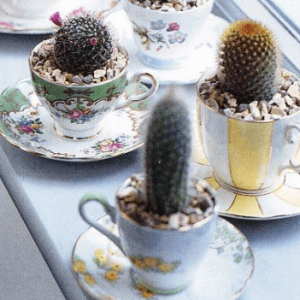 Teacup Planter - succulent