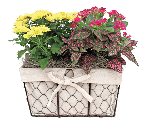 Flower Hamper