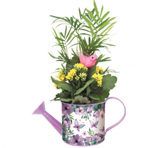 Spring watering Can planter