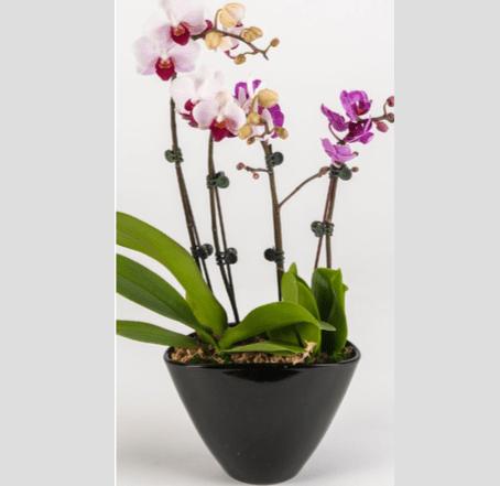 Orchid garden2
