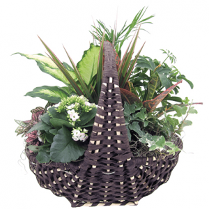 Tropical Botanical Basket