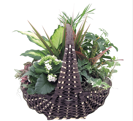 Tropical Botanical Basket
