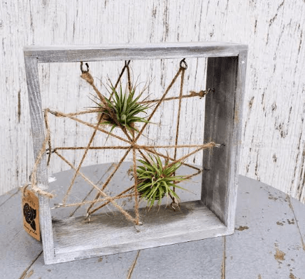 Capture airplant frame