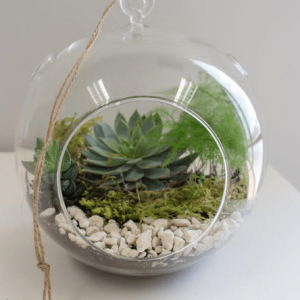 7 inch Floating Orb Terrarium Kit