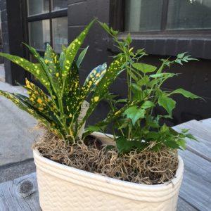 Plant Buddies