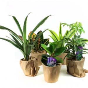 Set of 5 Happy Plants