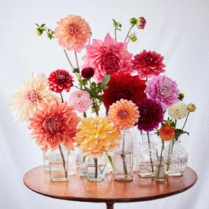 Bright Blooms Mix